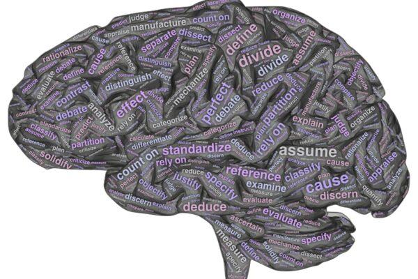 Rational Brain